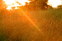 Sunset Field 1